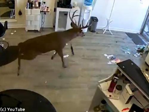 野生の鹿が窓から…美容室のビックリハプニング00