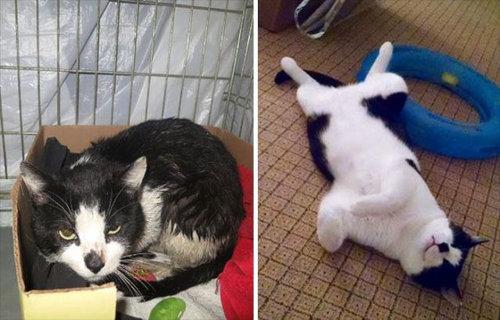 救助された猫06