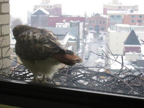 窓にやってきたお客さんたち06