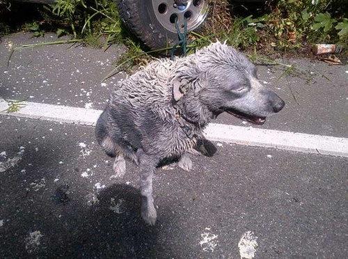 ペンキ缶を乗せた車が事故03