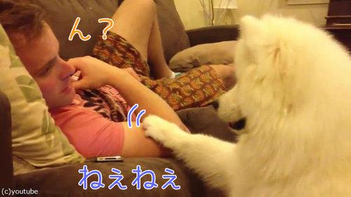 犬「あなたに寄り添ってもいいですか?」00