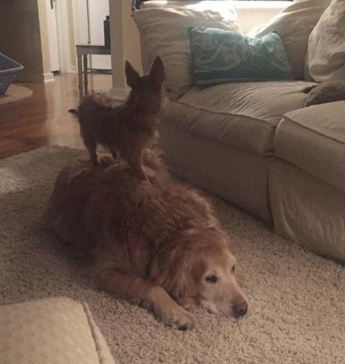 犬2匹のおねだり方法07