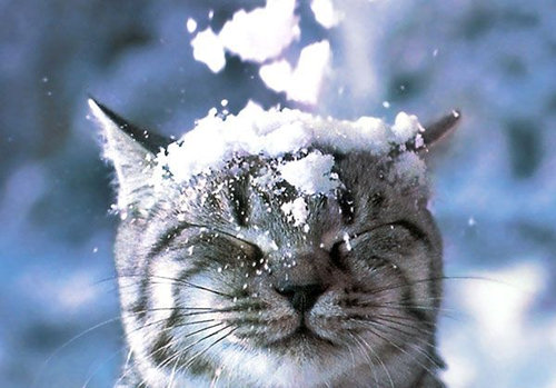 雪なんてへっちゃらな猫01