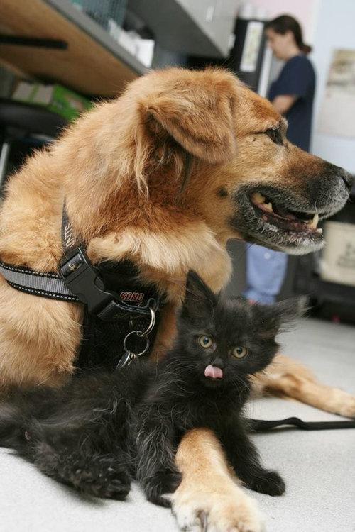 ハリケーン・カトリーナから救出された犬、猫のお母さん役となる05