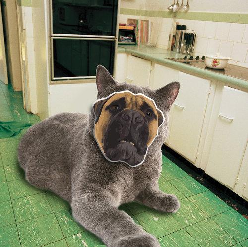 犬に猫マスク10