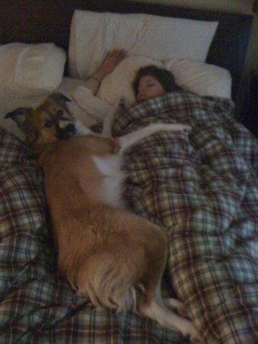 犬と一緒に寝ると03