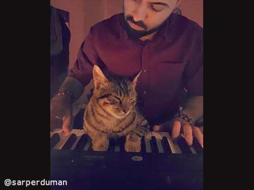 飼い主さんの演奏にメロメロな猫01