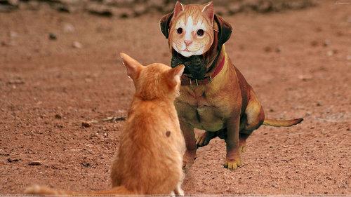 犬に猫マスク13