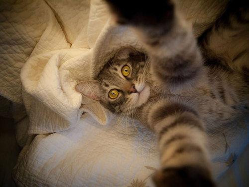 猫の自撮り04