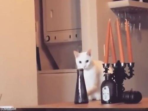 そっと動かして、そっと戻す猫(動画)01