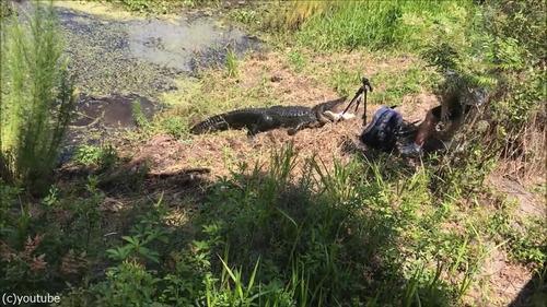 フロリダのワニに襲われる01