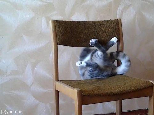 猫がイスでアクロバティック03