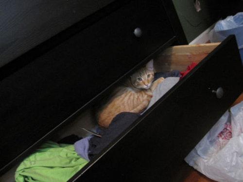01かくれんぼする猫たち