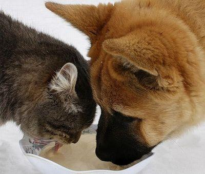 ロシアの犬と猫02