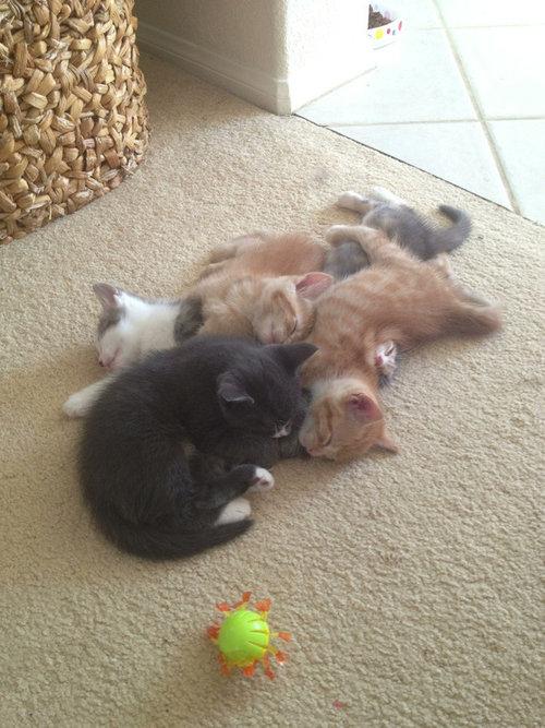 どこでも寝る猫たち05