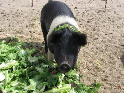 野菜がベーコンに01