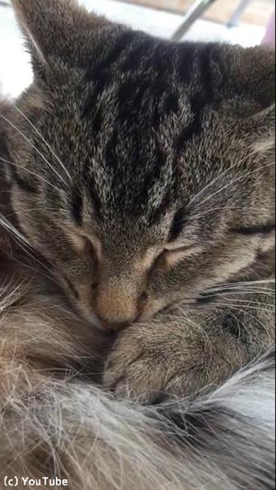 ネコ科の最高お昼寝コラボ01