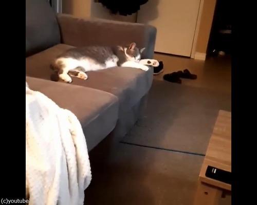 猫「バネが大好きなんです」01