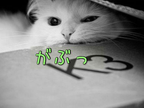 うちの猫がダンボール箱を噛んだ理由00
