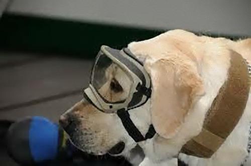 メキシコ地震で52人を救った犬03