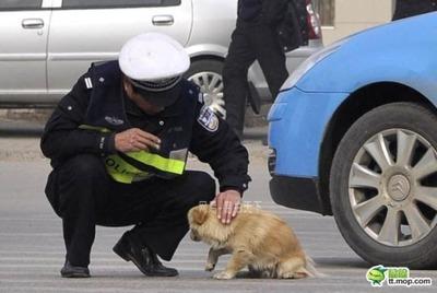 犬と警官02