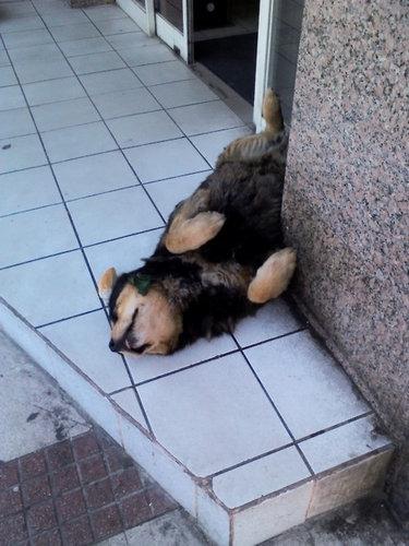 仰向けの犬02