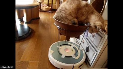 ルンバを乗りこなす猫10