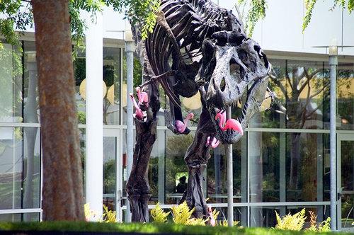フラミンゴの群れはティラノサウルスを90秒で倒せる05