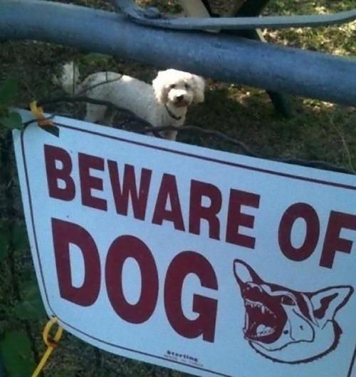 猛犬注意…と思ったら違う例01
