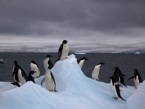 怖いペンギン00
