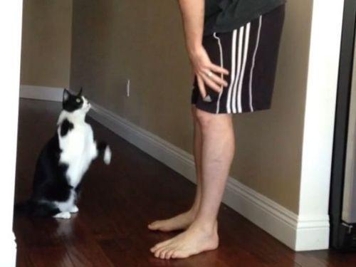 抱っこ猫01