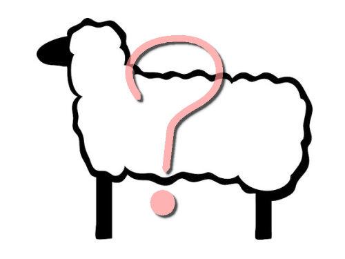 世界一かわいい羊00
