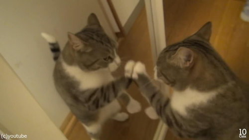 猫10匹と大きな鏡11