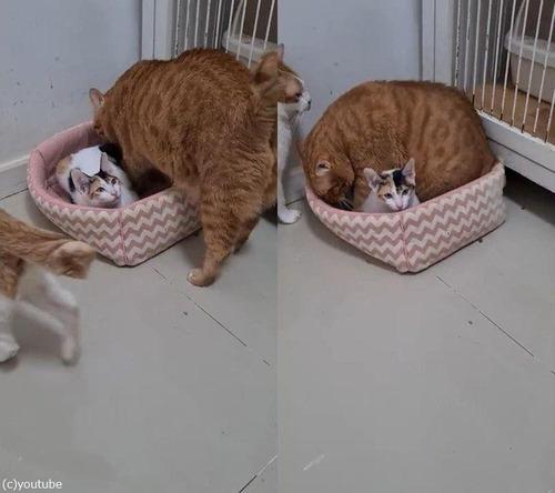 ベッドと大きな猫00