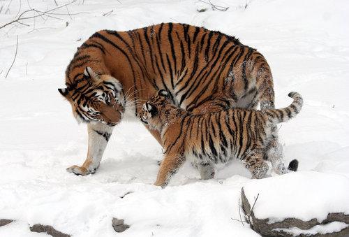 12動物の親子