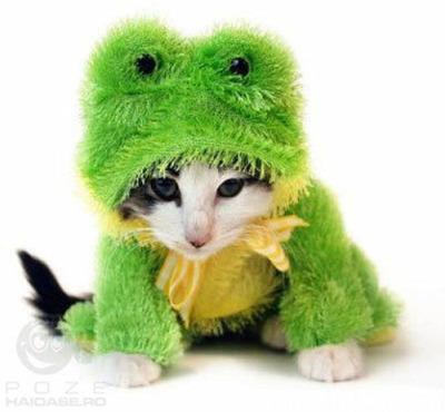 猫コスプレ01