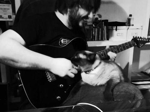 ギターを弾いてたらヒザに猫が乗ってきた01