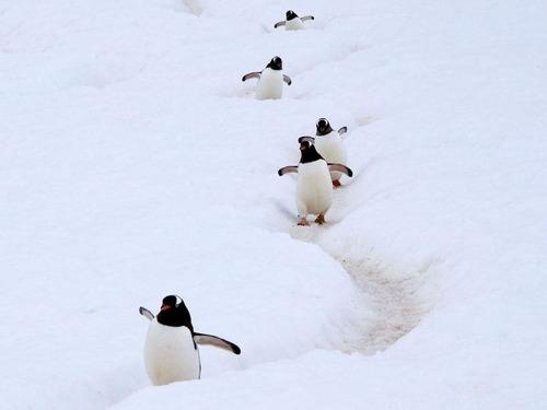 ペンギンのゆで卵00