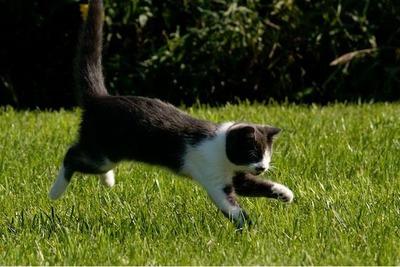 盲目の猫06