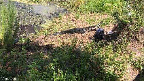 フロリダのワニに襲われる02