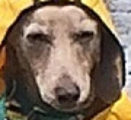 犬のレインコート06