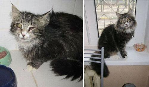 救助された猫15