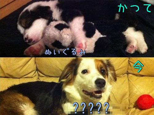 ぬいぐるみと犬猫の関係00