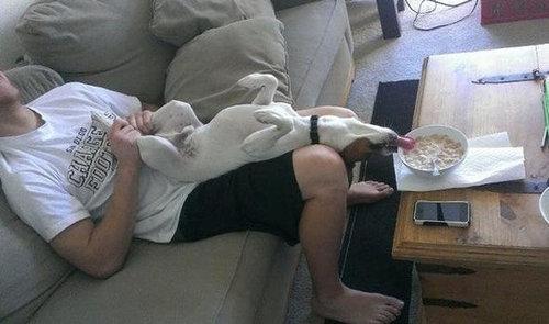 犬を飼うべき理由19