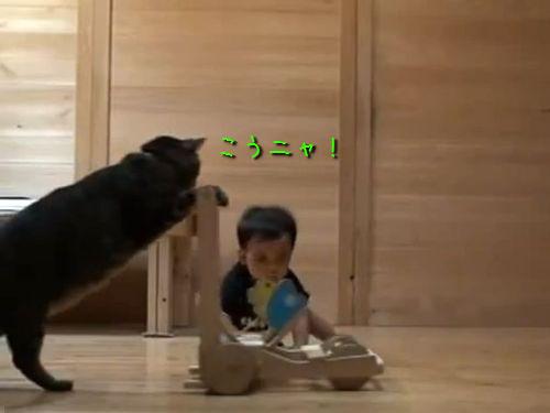 赤ちゃんに遊び方を教える猫00