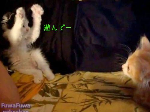 子猫のポーズ00