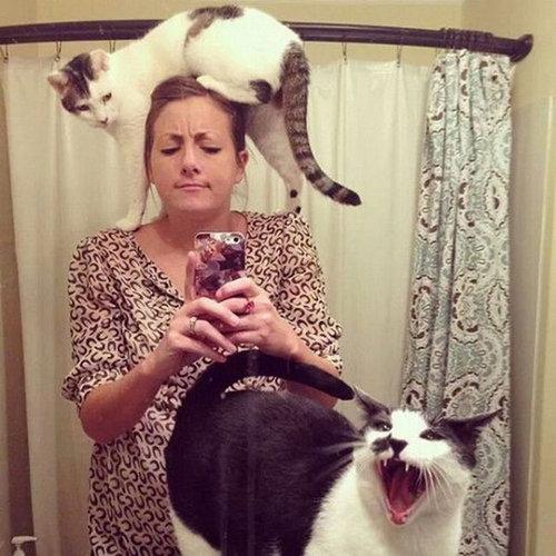 猫に生活を脅かされる08
