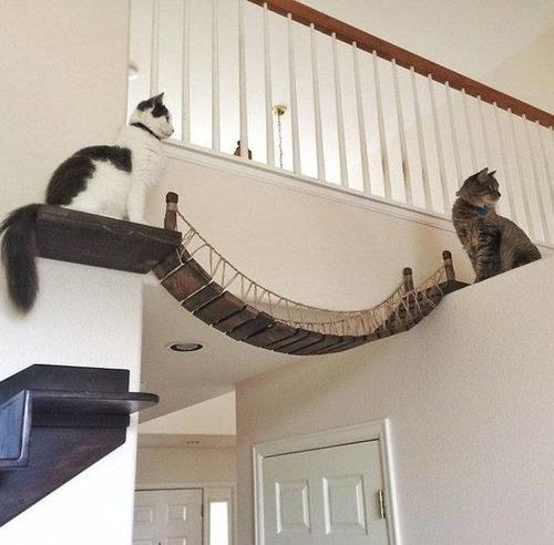 猫と吊り橋08