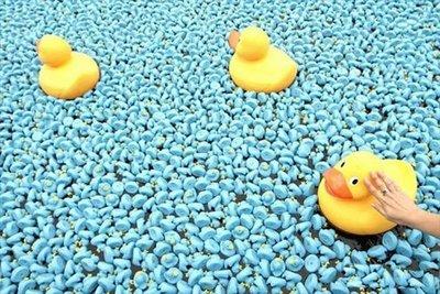 25万匹のおもちゃのアヒル04