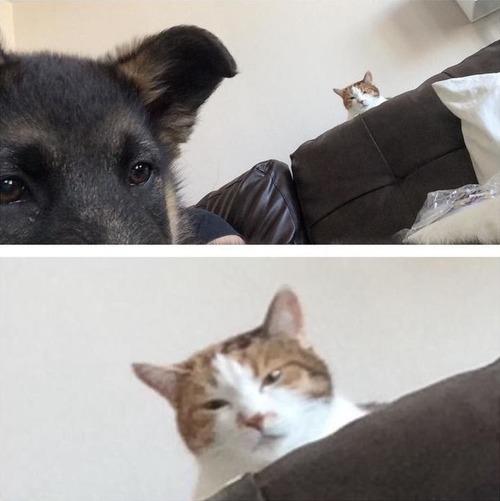 犬と猫の仲がよろしくないとき04